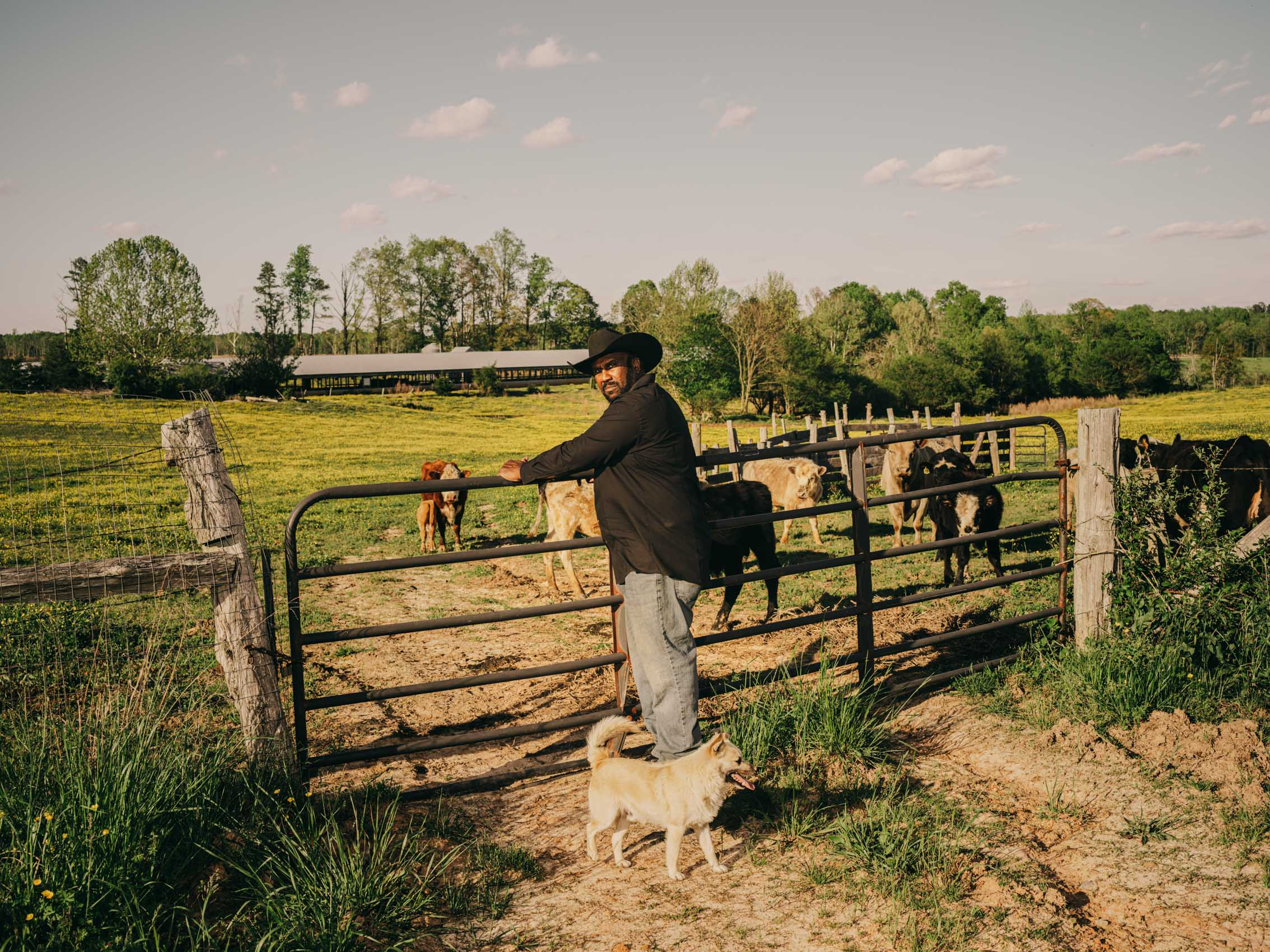 John Boyd Jr. at gate with cows on his farm in virginia