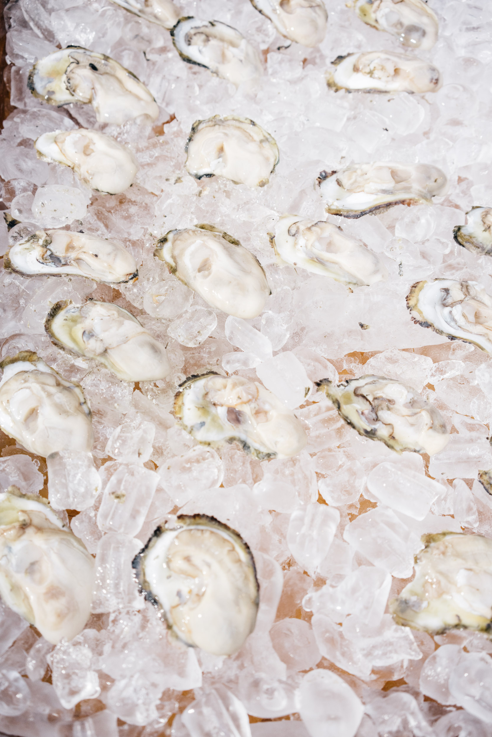 oysters served up on ice