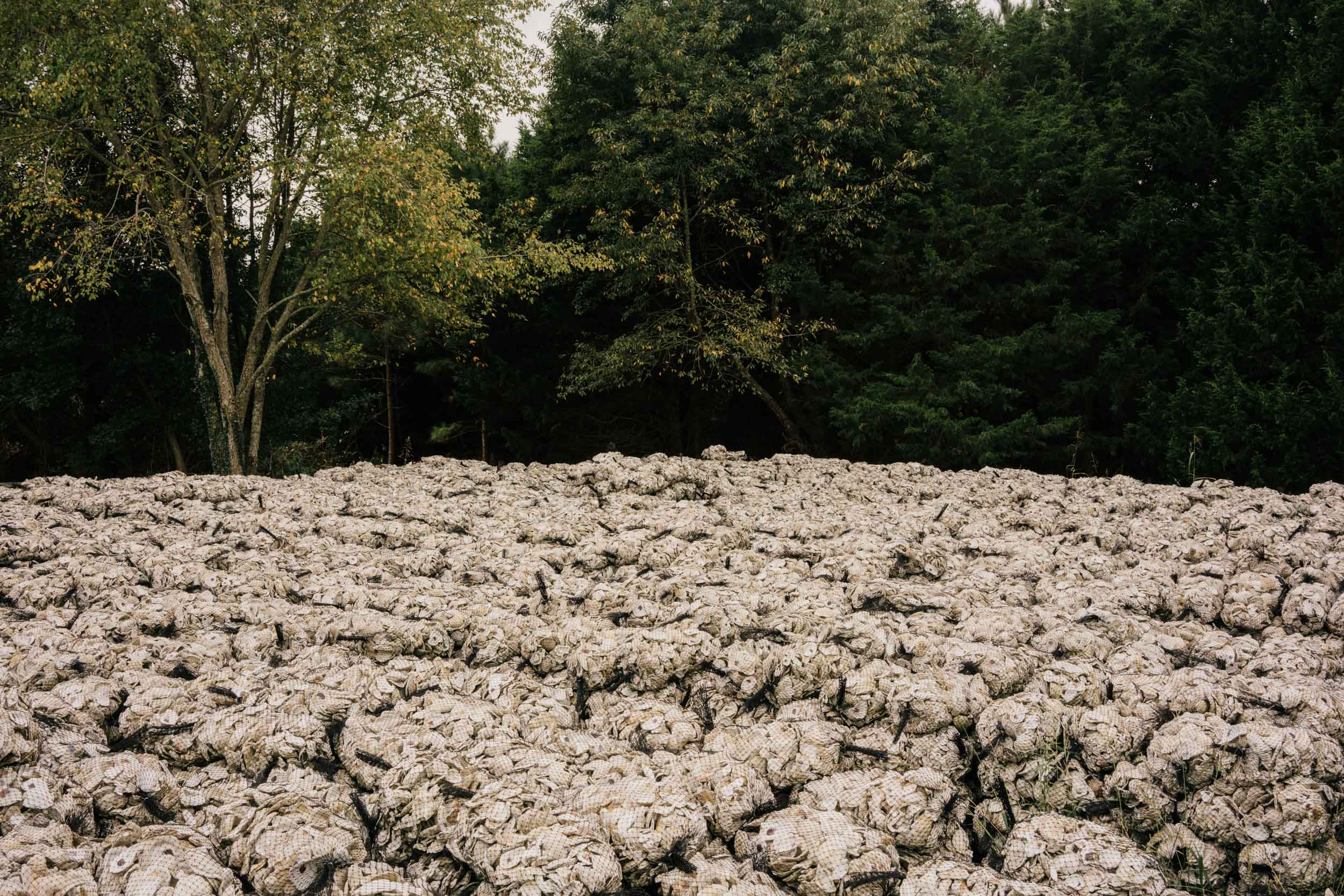thousands of oyster shells in bag stacked near trees