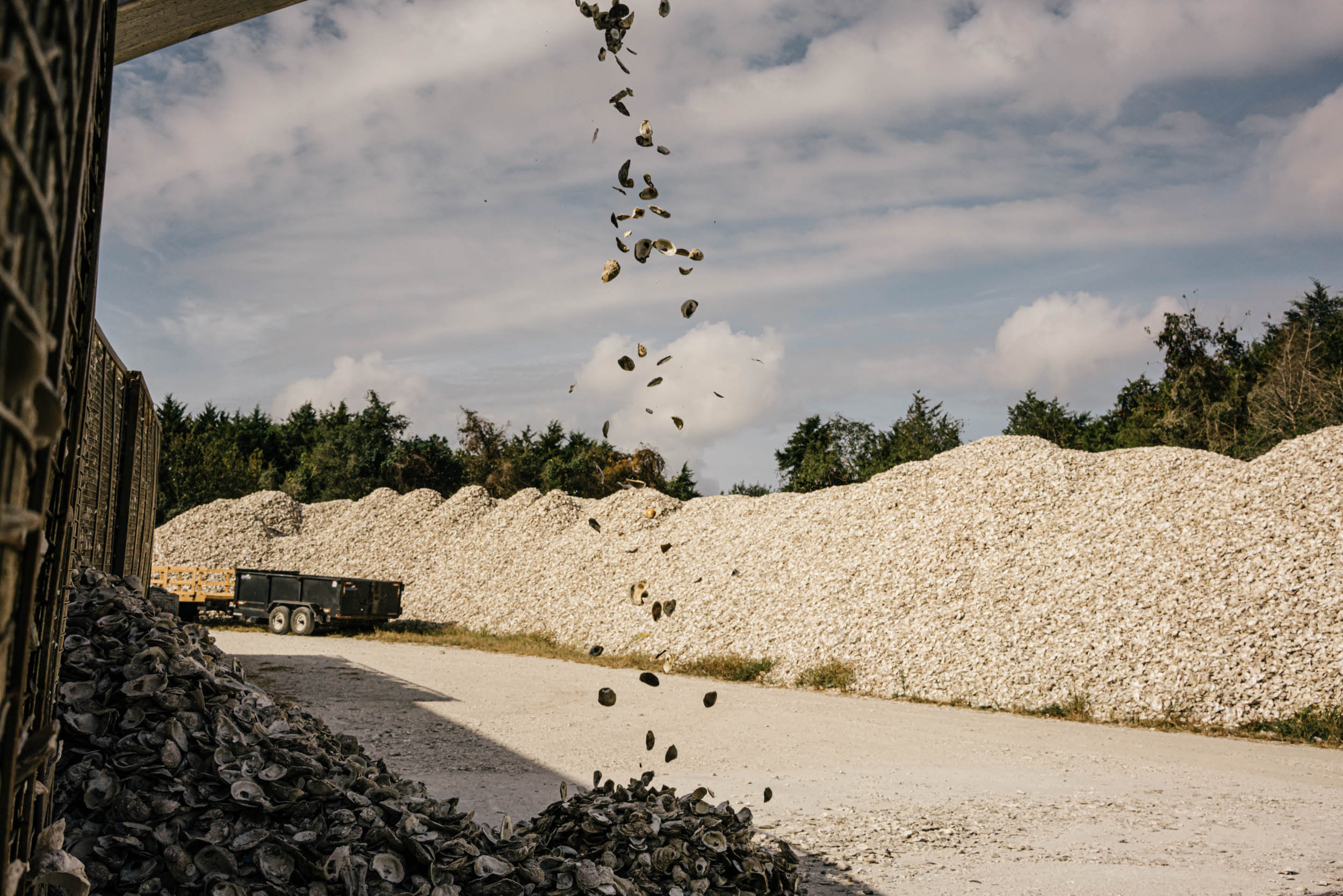 oyster shells being cleaned for use in the Chesapeake bay