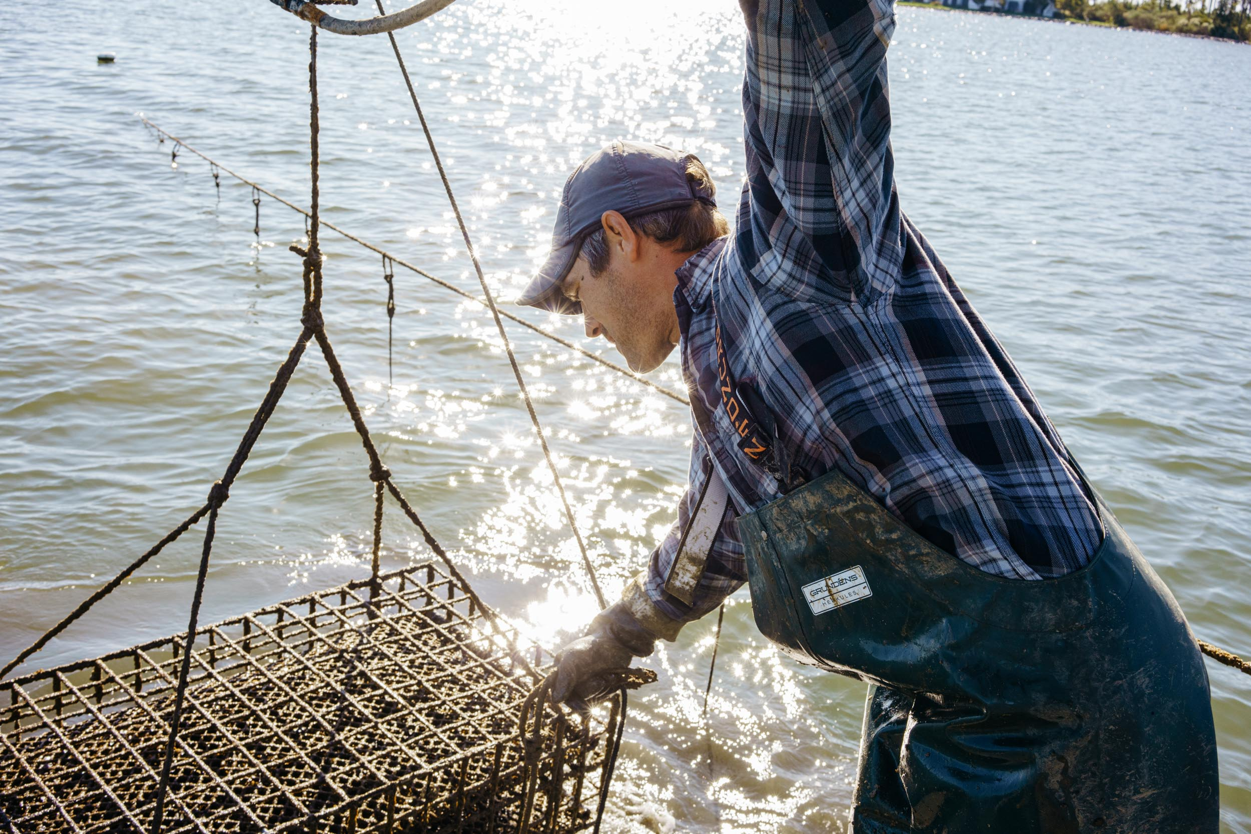 waterman pulling up oyster cages