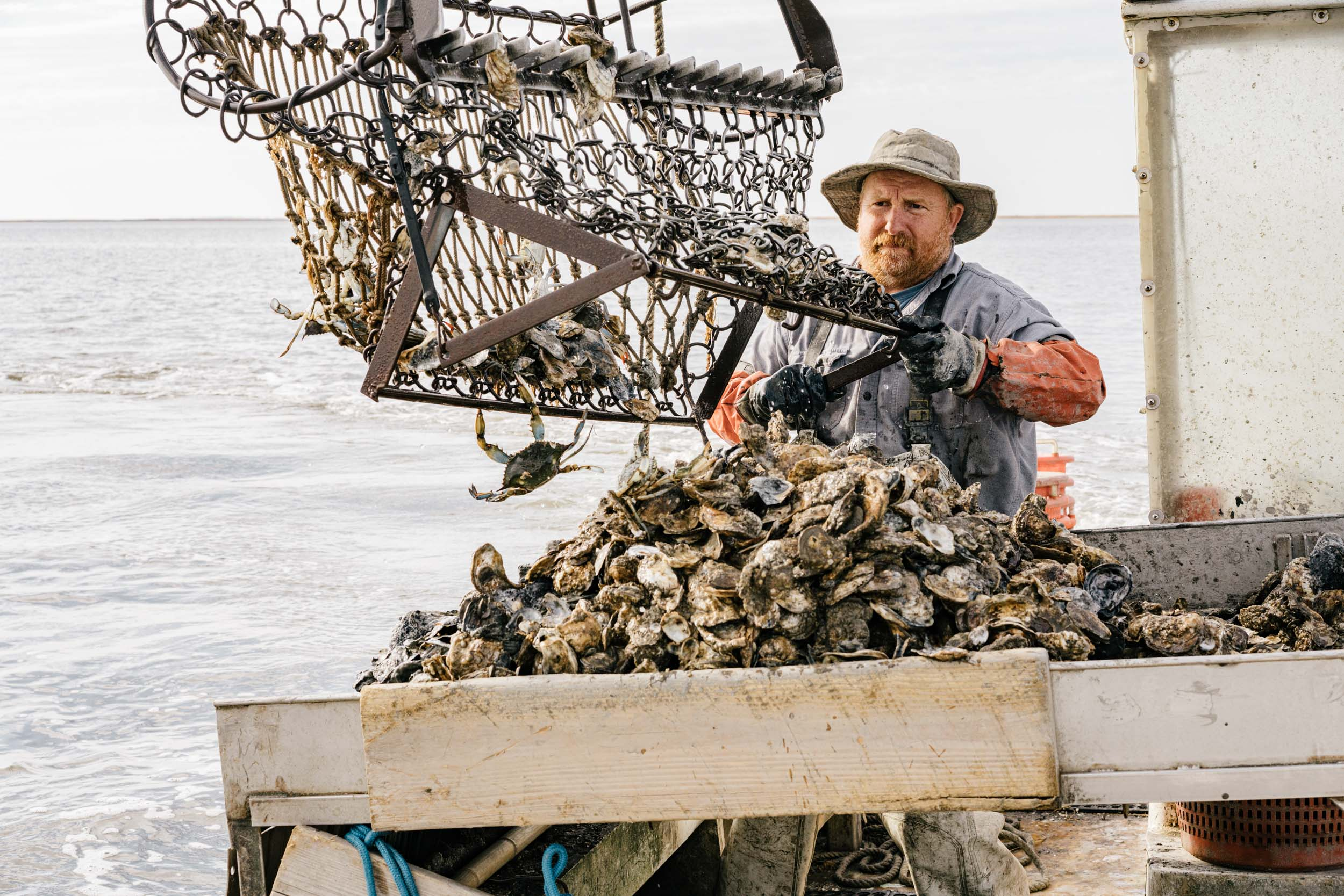 waterman dumping oysters to sort