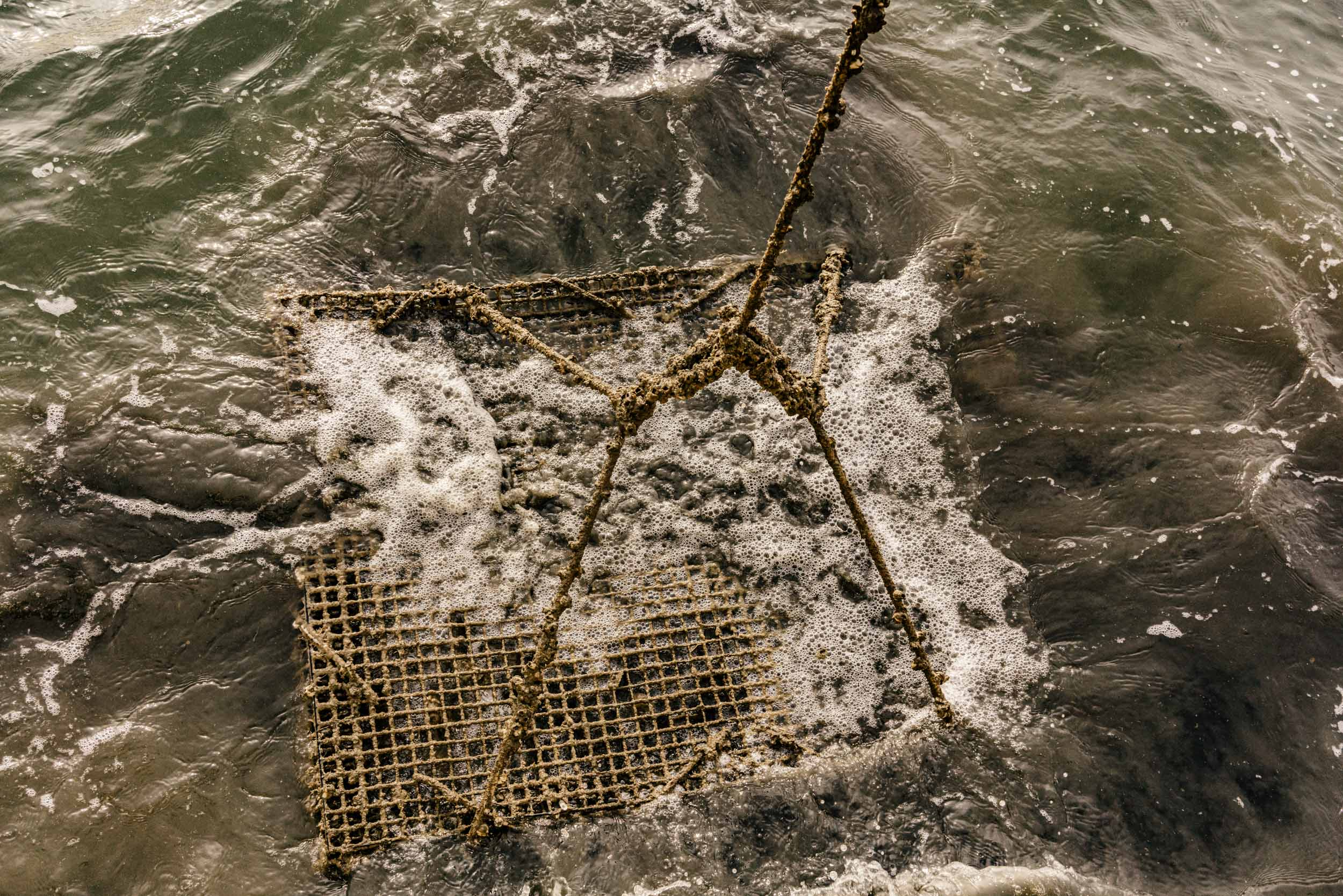 oyster crate emerging from water