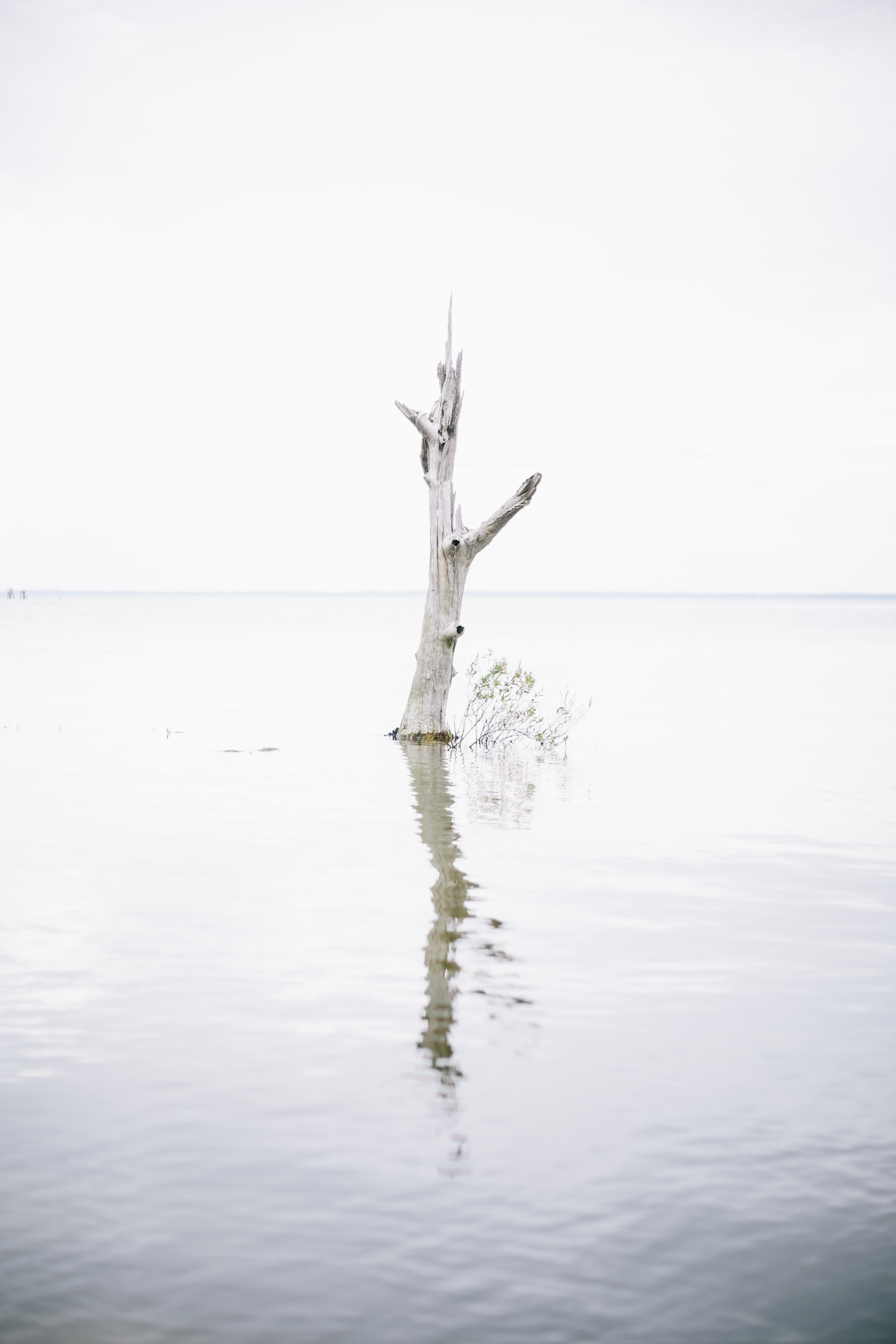 tree surrounded by salt water