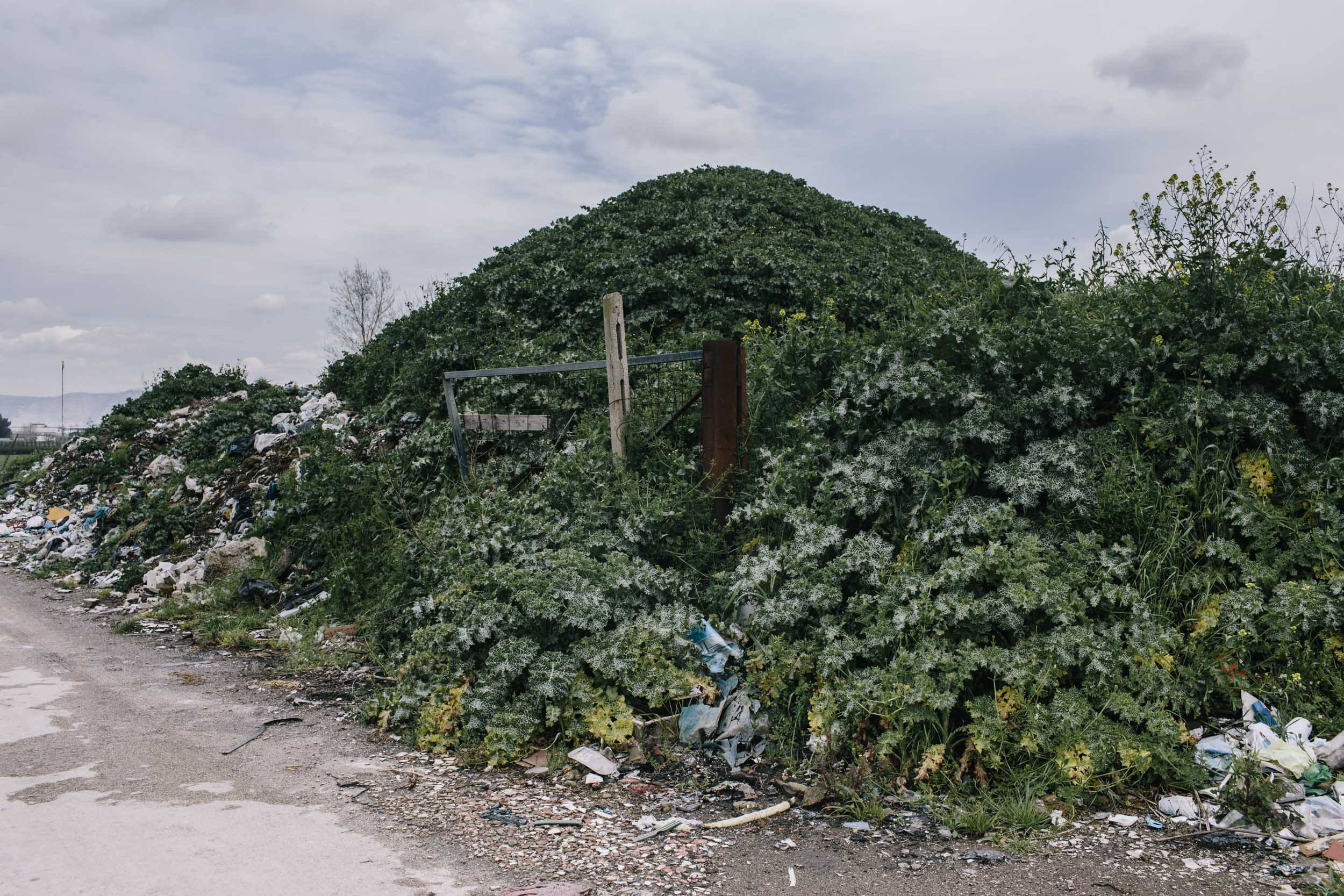A mound of toxic materials covered by vegetation