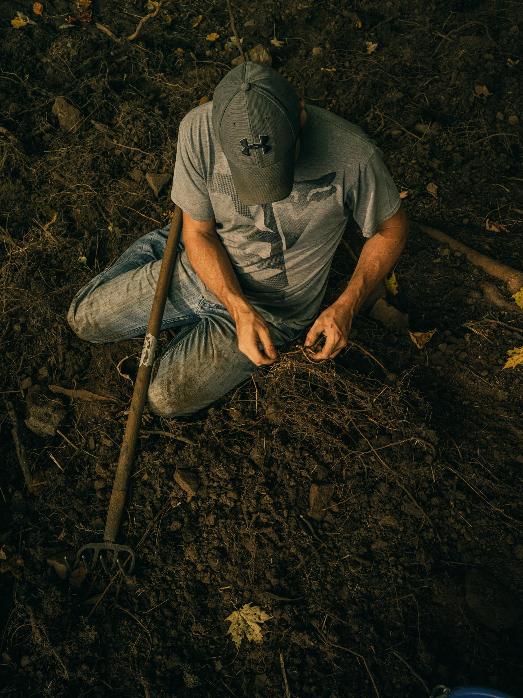 Washington DC editorial photographer farmer picking dirt of ginseng root